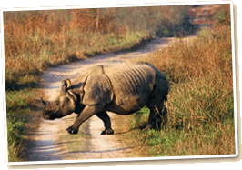 Rhino crossing trail