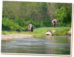 Elephants by the river, taken from the lodge garden