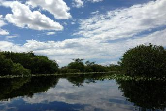 Gray Line Everglades Airboat Adventure with Transportation & Biscayne Boat Tour