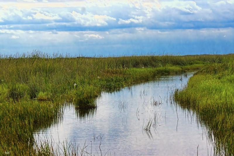 Everglades Airboat Adventure Tour With Transportation Miami United States Gray Line