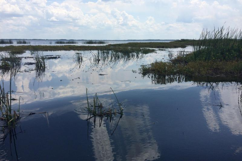 Ultimate Airboat Ride At Wild Florida From Orlando Orlando United States Gray Line