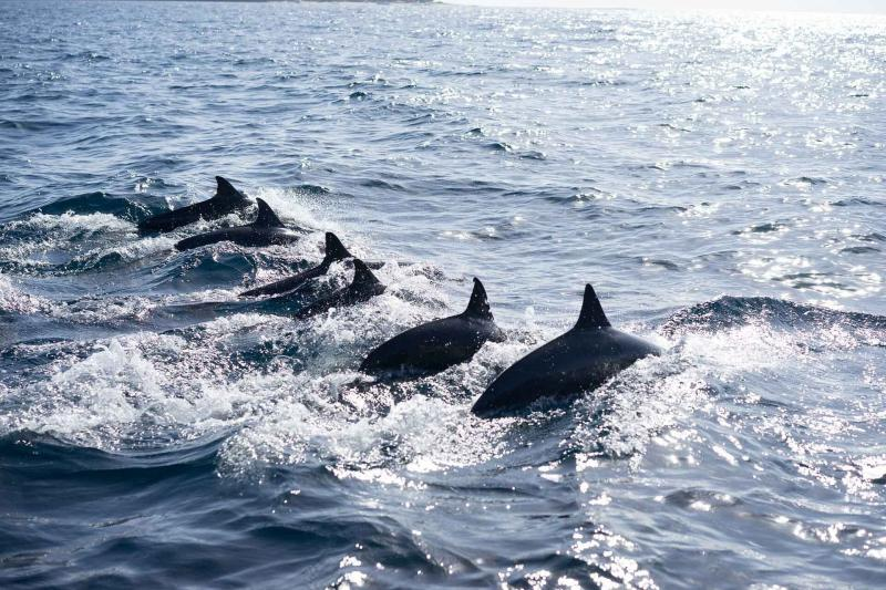 Pamilacan Marine Life Tour  Dolphin Watching From Bohol