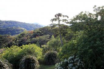 Gray Line From San Jose - Sarapiqui Canopy Zipline and Rainforest Adventure