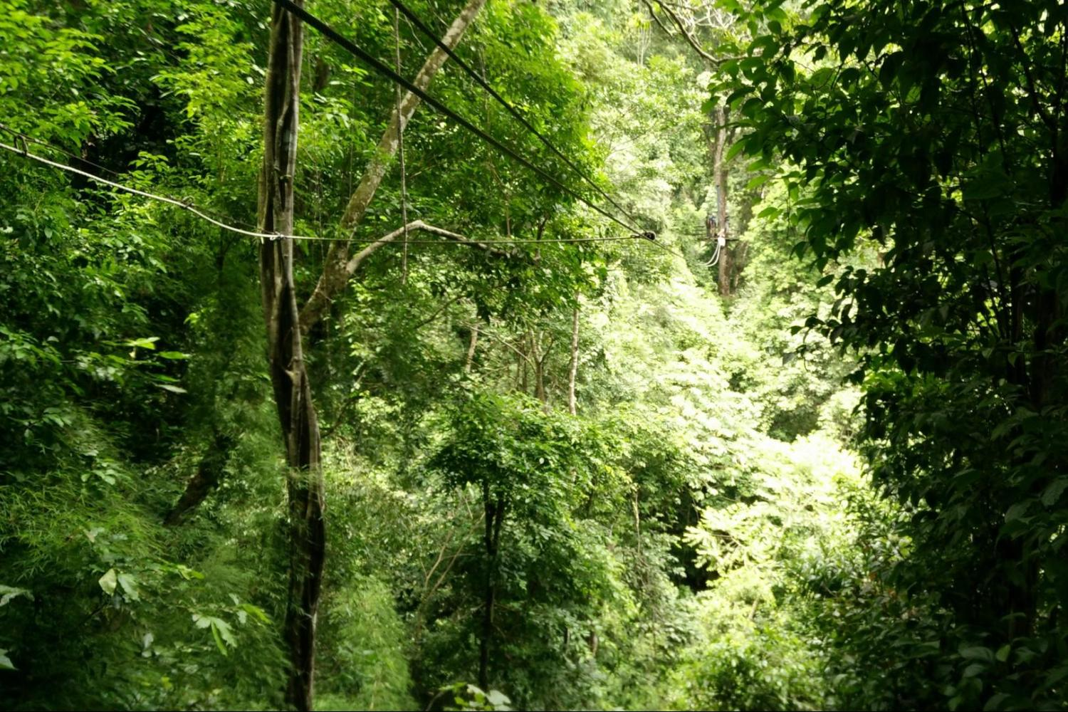 From Jaco - Tranopy: Rainforest Aerial Tram Pacific & Zip Line Canopy Adventure
