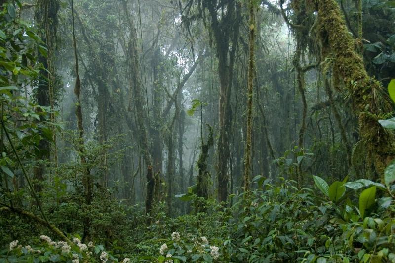 From Monteverde - Monteverde Cloud Forest Reserve - Monteverde, | Gray Line