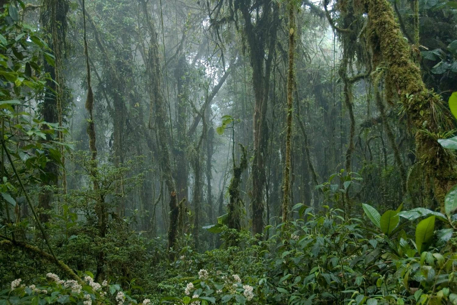 Immerse yourself in the natural landscape of the Monteverde Cloud Forest