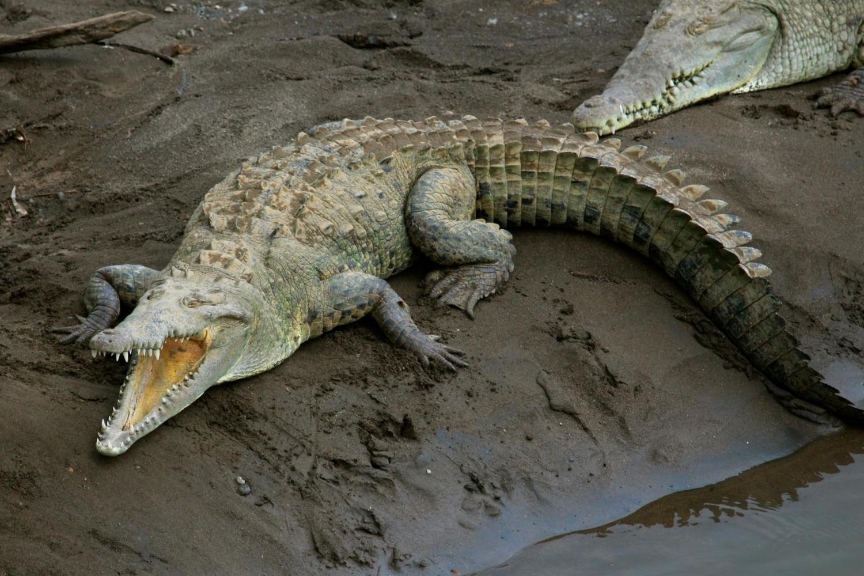 From Jaco - Crocodile Safari