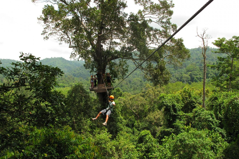 Soar above the jungle on a zipline