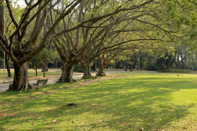 The Ibirapuera Park