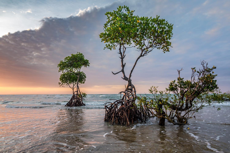 From Manuel Antonio - Damas Island Mangrove