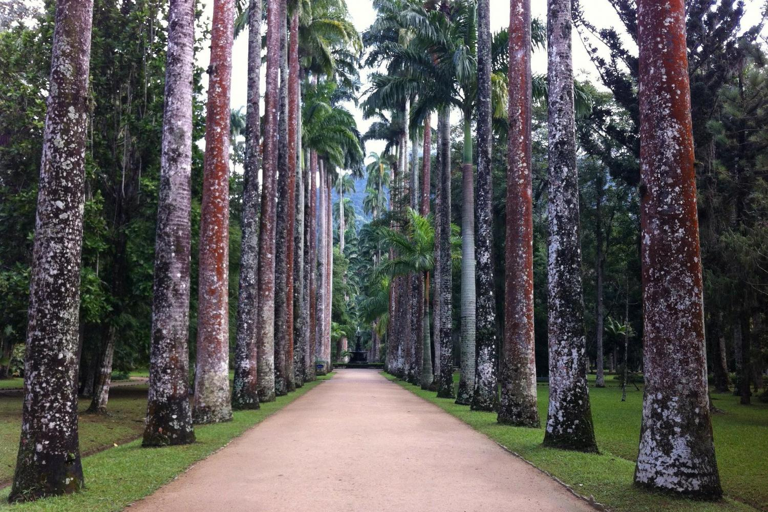 Check out the natural side of Rio on this tour of the Rainforest and Botanical Garden