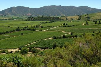 Gray Line Colchagua Valley Winery Day Trip from Santiago