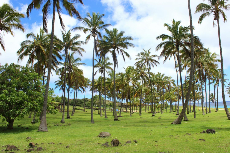 Journey to Anakena Island with Gray Line