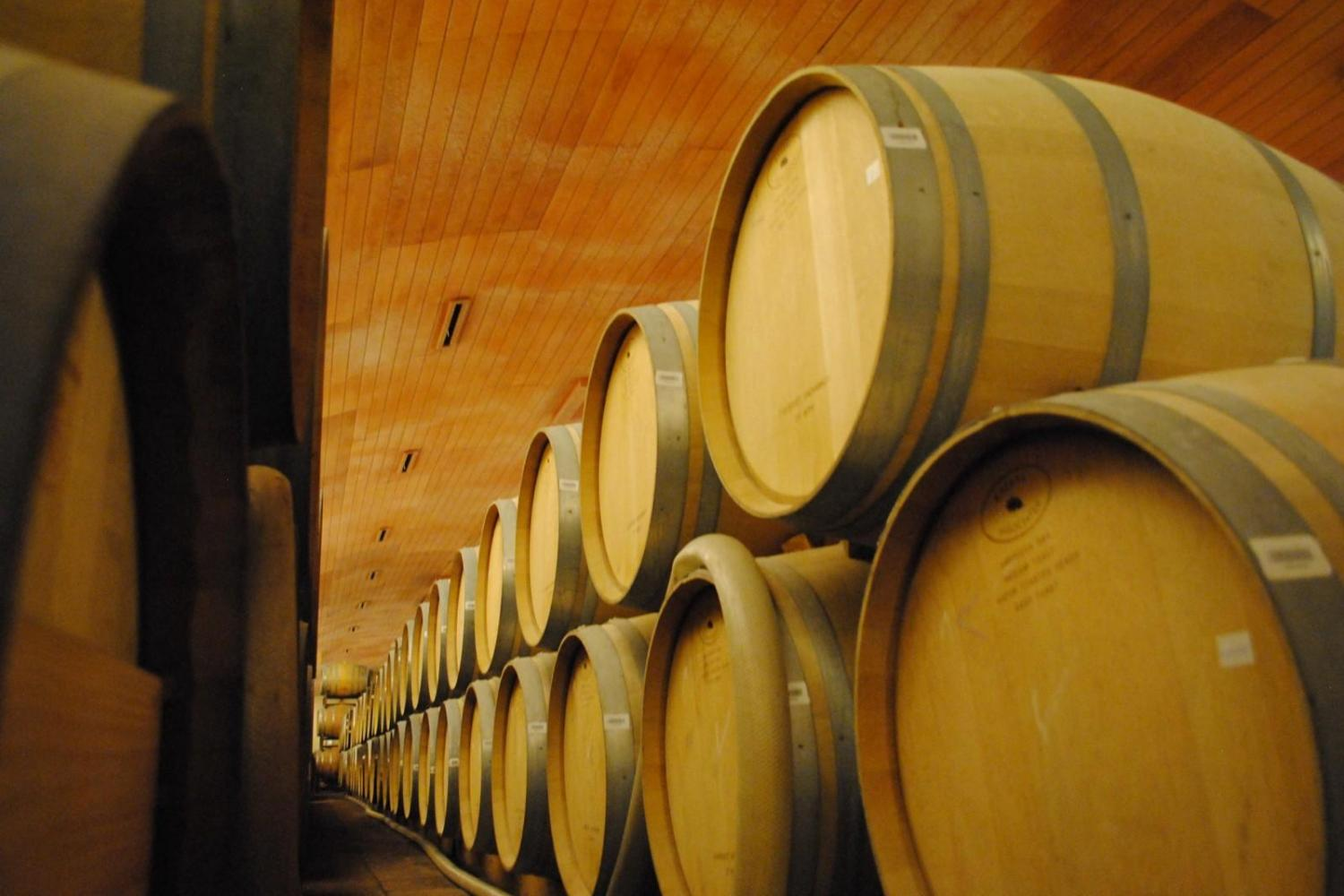 Visit the most famous Chilean Winery