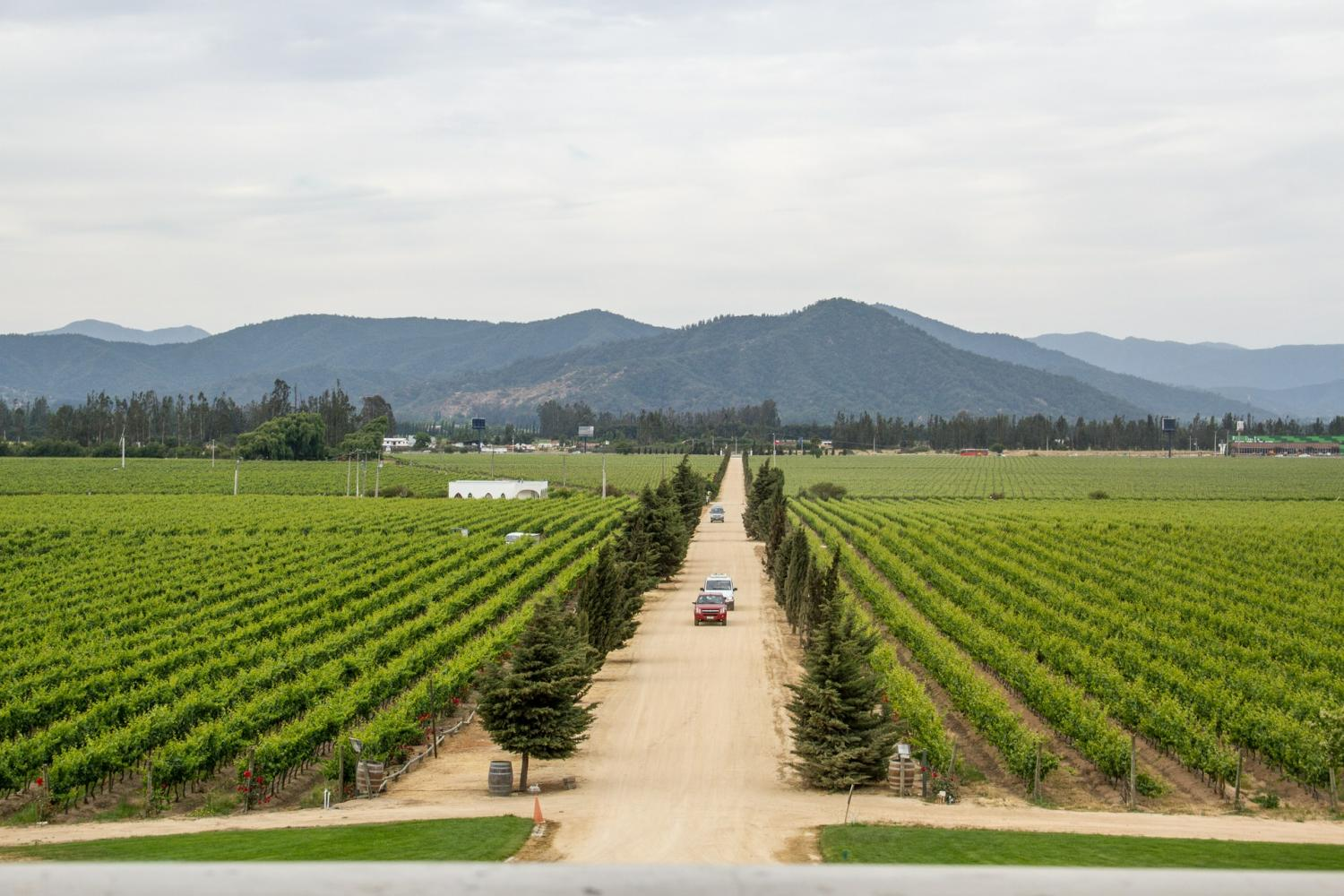 Casablanca Valley: Matetic Vineyards