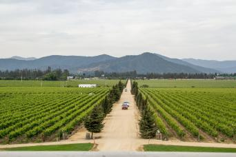 Gray Line Casablanca Valley: Matetic Vineyards