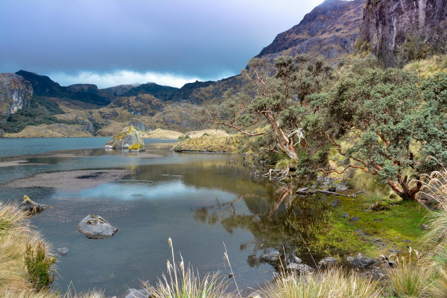 Cajas National Park Day Trip