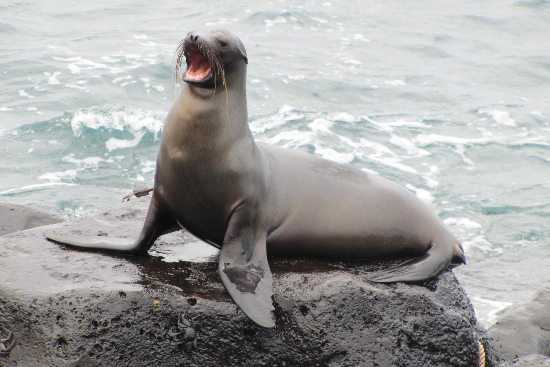 Mini Galapagos - 3½*** Hotel - 3 Days