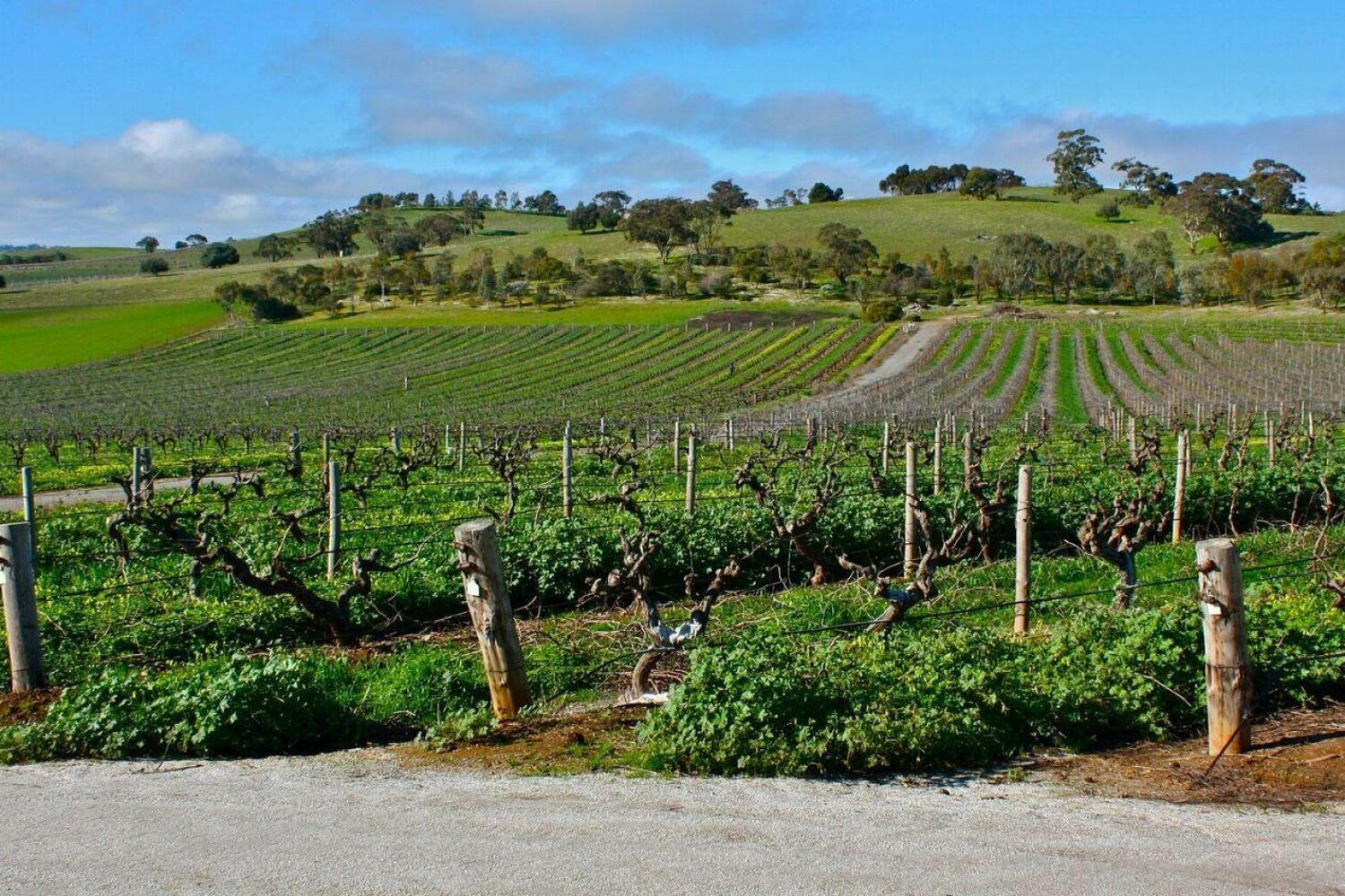 Grand Barossa Valley & Wineries