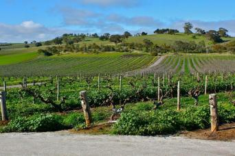 Gray Line Grand Barossa Valley & Wineries