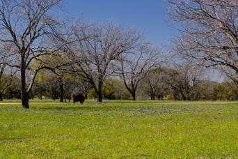 Gray Line Texas Hill Country & LBJ Ranch Tour From Austin
