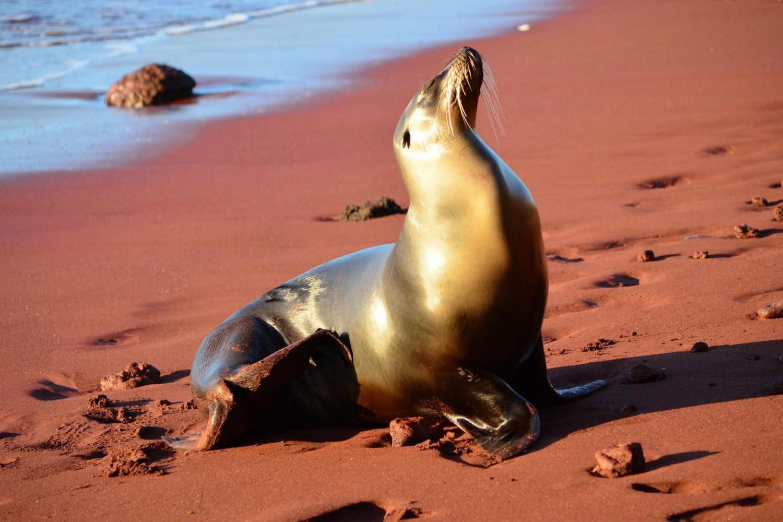Live Galapagos - 3½*** Hotel - 4 Days