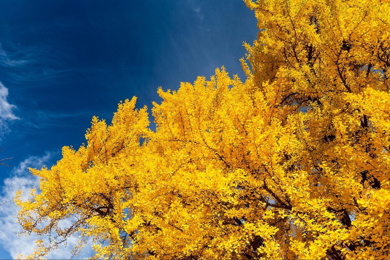 Boston Fall Foliage Sightseeing Tour
