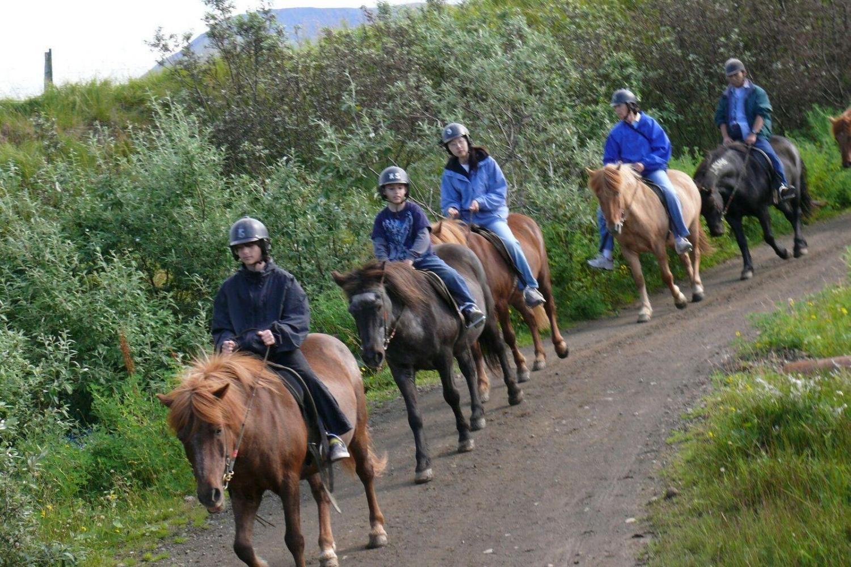 Explore the scenery and waterfalls around Paraty on horseback