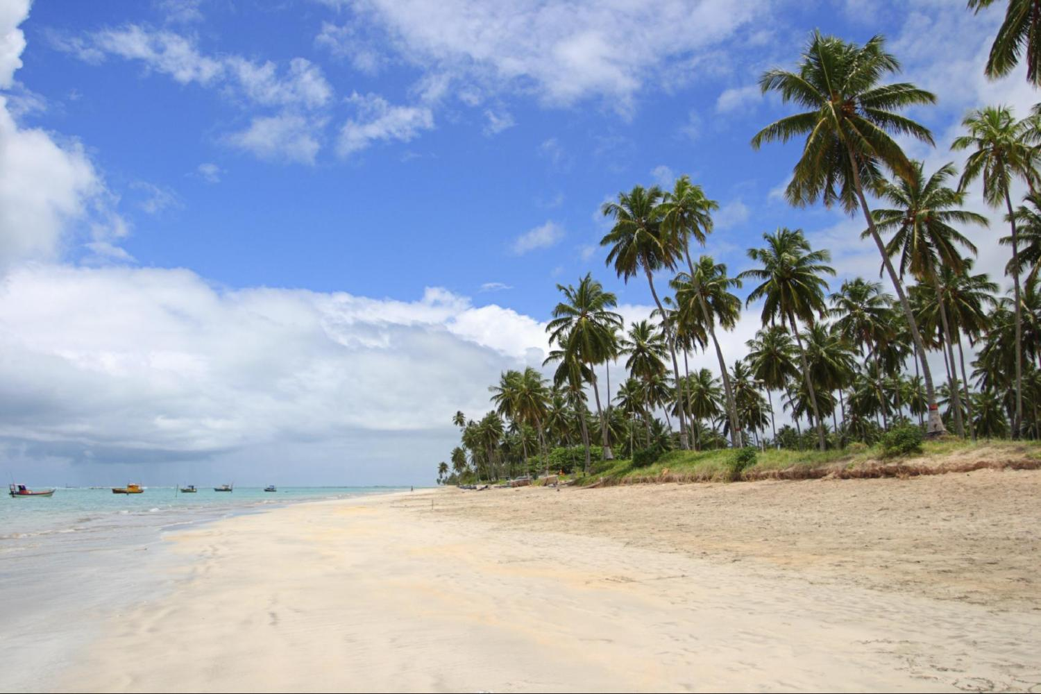 Wander amongst lush coconut groves on the beach paradise of Gunga
