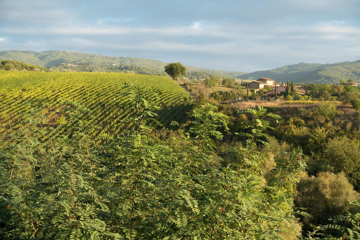 The best of Chianti Classico Tour, with three medieval Villages, two Wineries and a Typical Dinner