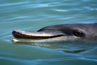 Gray Line Dolphin Adventure At Tangalooma Island Resort