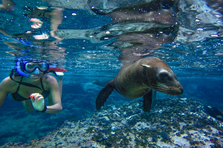 Sea of Cortez Snorkeling Adventure