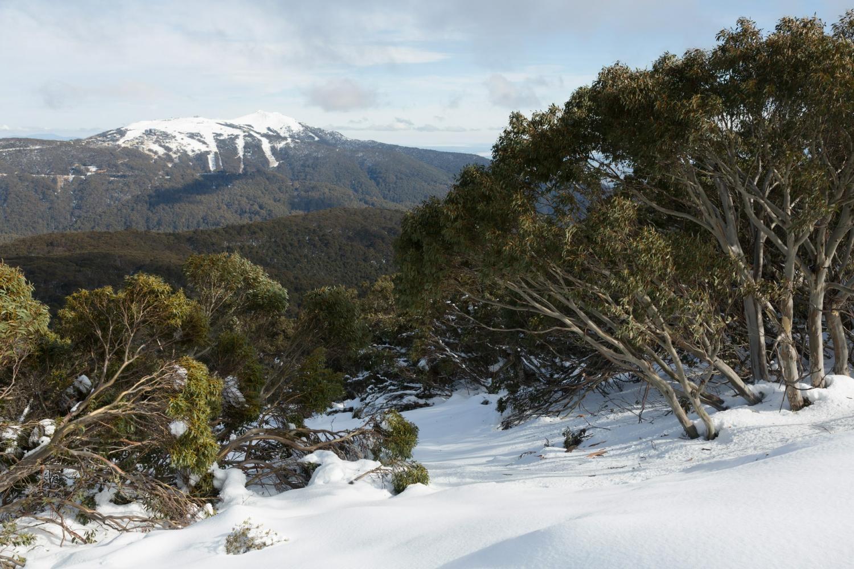 Mt. Buller Snow