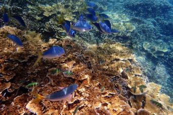 Gray Line Discover The Great Barrier Reef With Reef Magic Cruises