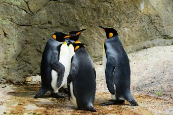 Gray Line King Penguin & Tierra del Fuego Tour