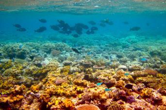 Gray Line 2 Day Reef Magic Cruise & Grand Kuranda From Cairns