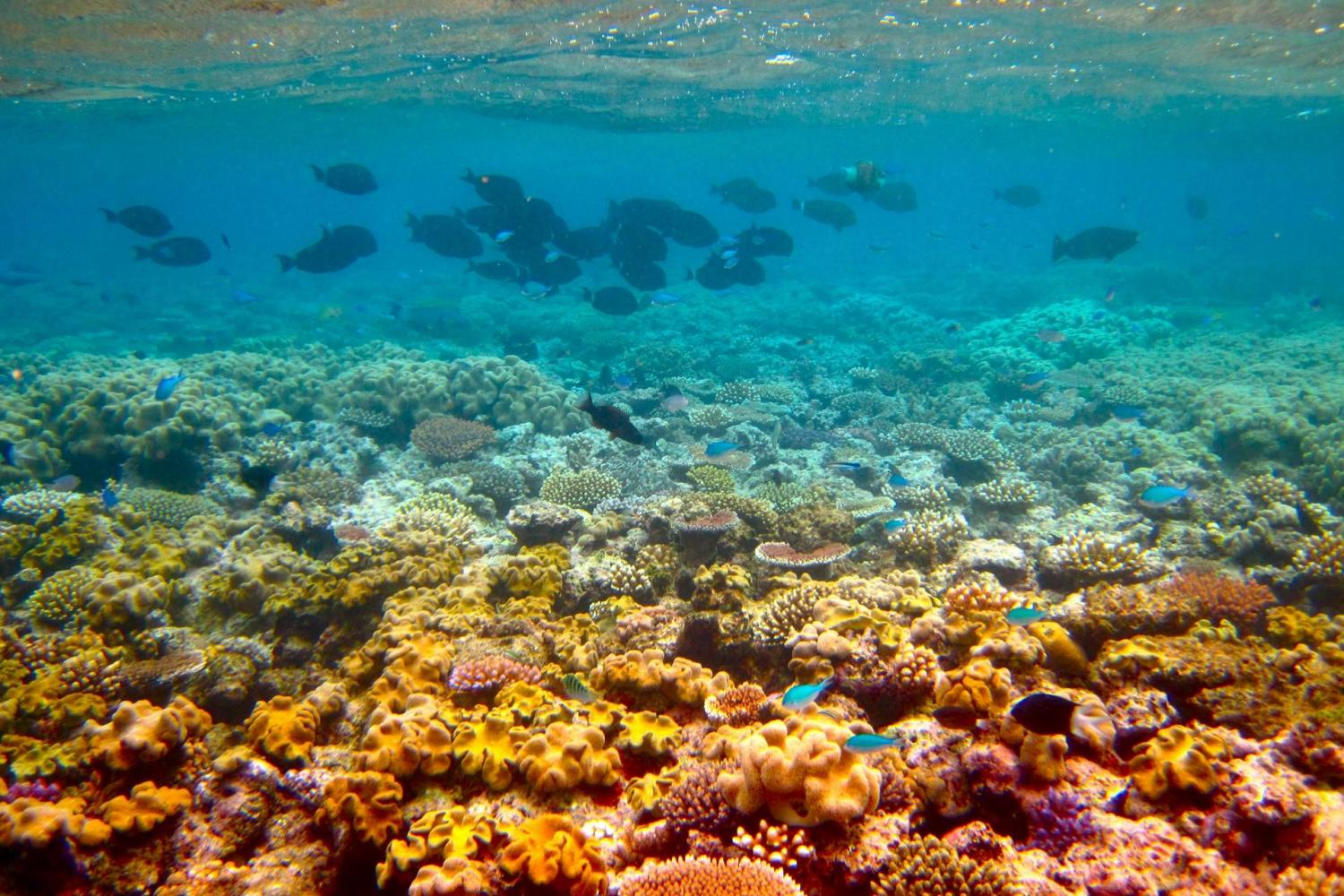 Discover The Great Barrier Reef With Sunlover Cruises