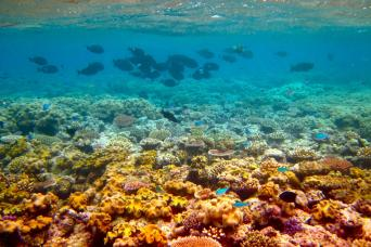Gray Line Discover The Great Barrier Reef With Sunlover Cruises