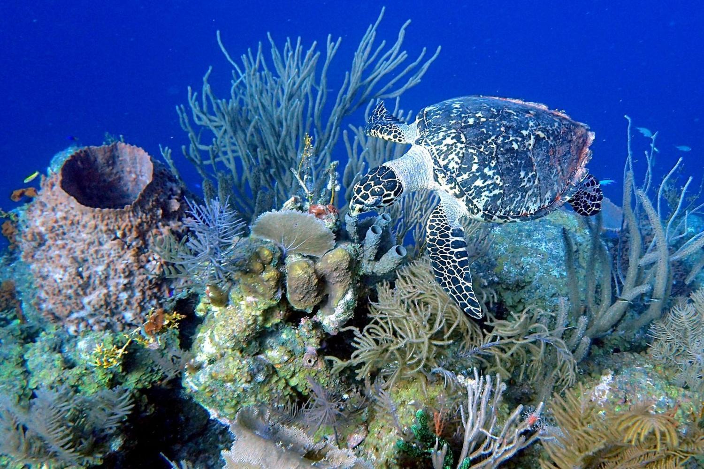 Snorkeling on Moore Reef