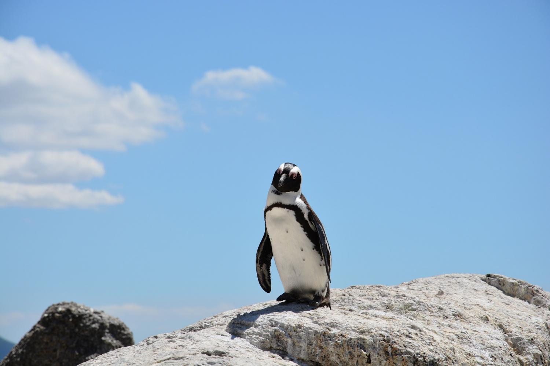 Catamaran to Magdalena Island Penguin
