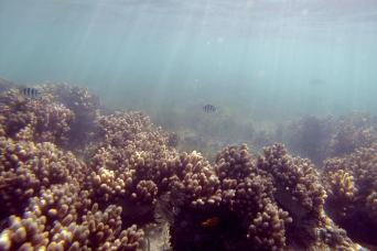 Gray Line Half Day in Paradise: Green Island Reef Tour