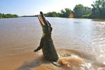 Gray Line Jumping Crocodiles