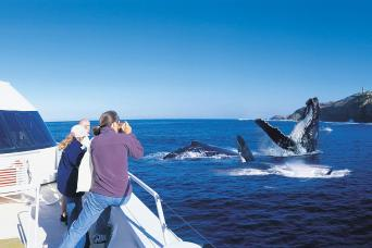 Gray Line Whale Watching Tour