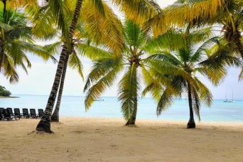 Gray Line Saona Island from Punta Cana