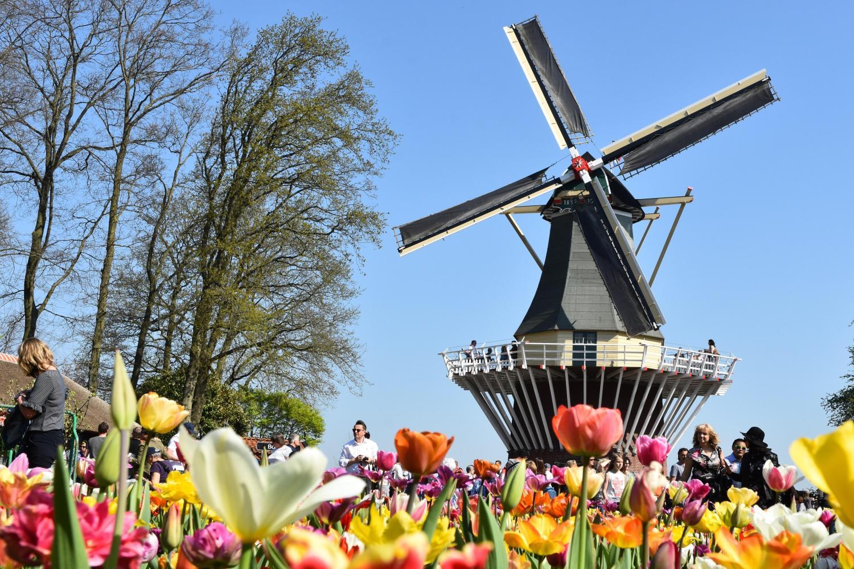 Keukenhof & Flowerfields Half day and City Canal Cruise