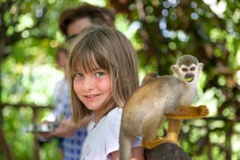 Gray Line Monkey Land Explorer