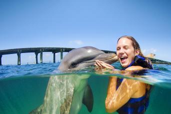 Dolphin Explorer