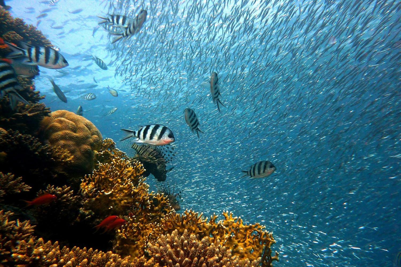 Reef Explorer