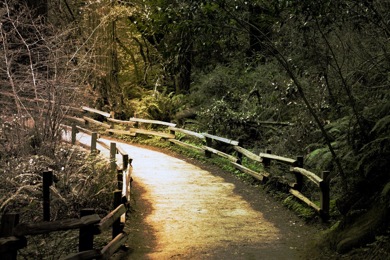 Muir Woods, Sausalito Half Day & 4 Hour Bike Rental