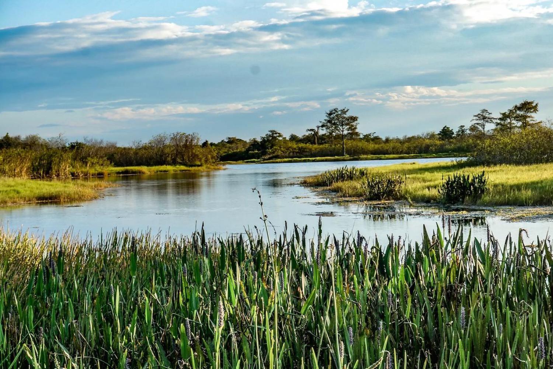 Jean Lafitte Large Airboat Swamp Tour